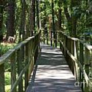 Wooden Boardwalk Through The Forest Art Print