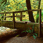 Wooden Bridge In The Hoh Rainforest Art Print