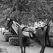 Wooden Horse6 Art Print
