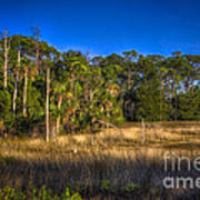 Woodland And Marsh Art Print by Marvin Spates