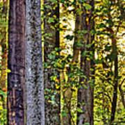 Woodland Morning Art Print