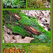 Woodland Mosses Art Print
