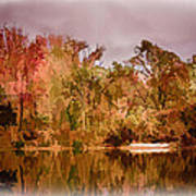 Woodland Reflections Art Print