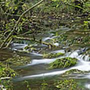 Woodland Stream - Monk's Dale Art Print