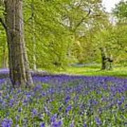 Woodland Walk In Blue Art Print