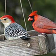 Woodpecker And Cardinal Art Print by John Kunze