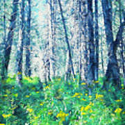 Woods 1 Art Print