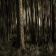 Woods Art Print by Mario Celzner