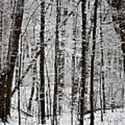 Woods On A Snowy Night Art Print by Penny Hunt