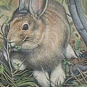Woods Rabbit Art Print