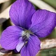 Woody Blue Violet Art Print