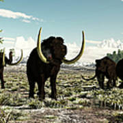 Woolly Mammoths In Europe Or Almost Art Print