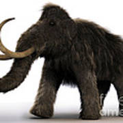 Wooly Mammoth Art Print