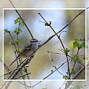 Wren In Spring 2013 Art Print