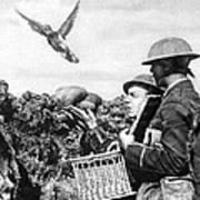 Wwi Releasing British Carrier Pigeon Art Print