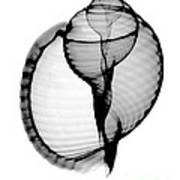 X-ray Of Scotch Bonnet Art Print