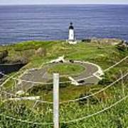 Yaquina Lighthouse From Salal Hill Trail  Art Print