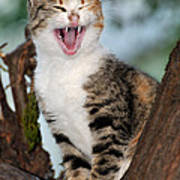 Yawning Cat Art Print