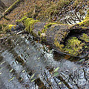 Ye Olde Mossy Log Art Print
