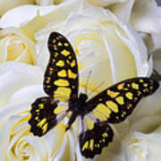 Yellow And Black Butterfly Art Print