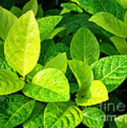 Yellow And Green Leaves Art Print