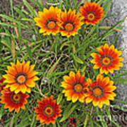 Yellow And Red Daisy Flower Art Print