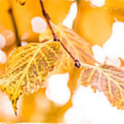 Yellow Autumn Art Print