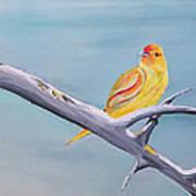 Pajarito Amarillo Art Print