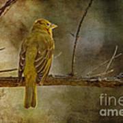 Yellow Bird Resting Art Print by Pam Vick