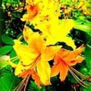 Yellow Bliss Art Print