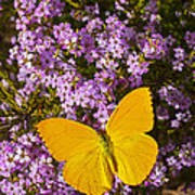 Yellow Butterfly On Pink Flowers Art Print