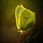 Yellow Butterfly Sitting On The Moss  Art Print