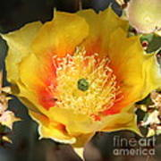 Yellow Cactus Flower Square Art Print