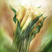 Yellow Callas Art Print