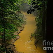 Hidden Cedar Sink Creek Art Print