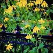 Yellow Coneflowers Echinacea Wrought Iron Gate Art Print by Rich Franco