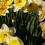 Yellow Day Lilies Art Print