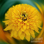 Yellow Delight Art Print