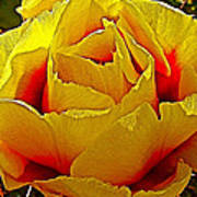 Yellow Engelmann Prickly Pear On Chihuahuan Desert Trail In Big Bend National Park-texas   Art Print