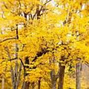 Yellow Fall Art Print