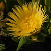 Yellow Flower 1.7103 Art Print