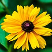 Yellow Flower - Featured 3 Art Print