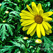 Yellow Flower Of Spring Art Print