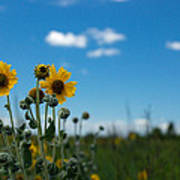 Yellow Flower On Blue Sky Art Print
