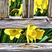 Yellow Flowers By The Bench Art Print