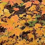 Yellow Foliage Art Print