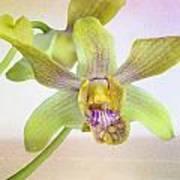 Yellow-green Orchid Art Print
