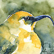 'akiapola'au - Hawaiian Yellow Honeycreeper Art Print