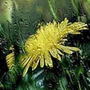 Yellow In The Rain Art Print