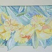 Yellow Iris' Art Print
